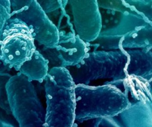 Des molécules extraites de bactéries marines pour la cosmétique