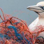 Une trentaine de multinationales s'allient pour réduire les déchets plastiques