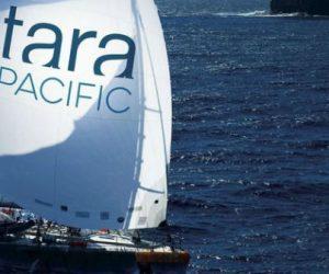Retour de l'expédition Tara Pacific : des constats inattendus sur un patchwork corallien