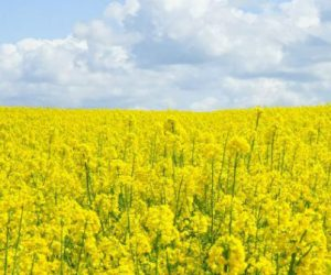 Agrocarburants: «Le remède est pire que la maladie»