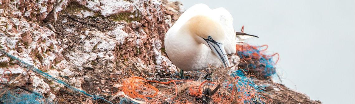 Une stratégie politique pour un usage soutenable des plastiques