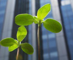 Management de l'innovation et développement durable