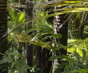 En Afrique centrale, les forêts tropicales sont menacées