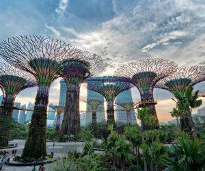 Biomimétisme en architecture : Vers une conception régénérative