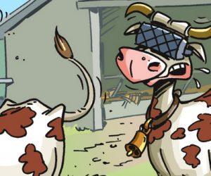En image : les vaches, nouvelles cibles des casques VR?