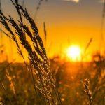 Une réforme de la Politique Agricole Commune qui manque d'ambition