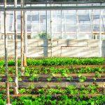 Fermes urbaines : l'agriculture en ville, un marché juteux ?