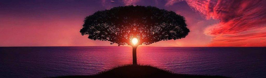 Arbre coucher de soleil
