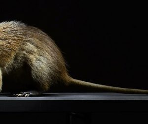 La Liste rouge des espèces menacées en Martinique est dévoilée