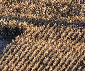 L'alimentation fédère, l'agroalimentaire suit... des satisfactions illusoires ?