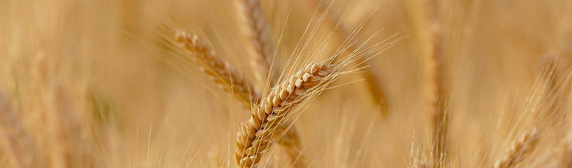 De la ferme à la table : moins de pesticides, plus de numérique
