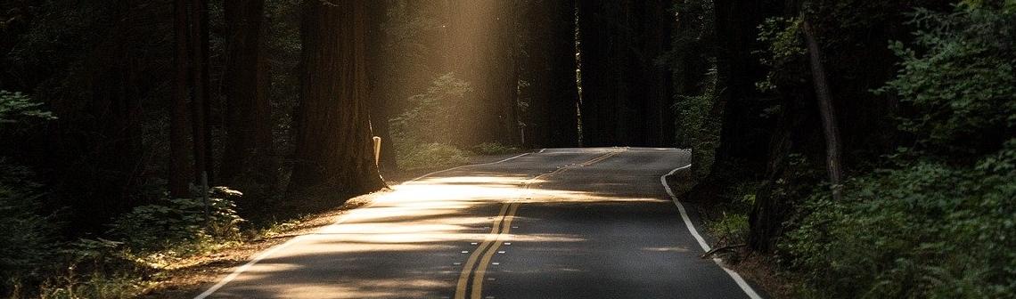 Route et arbres