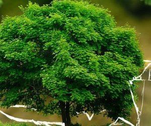 73 organisations appellent à une reconstruction écologique solidaire