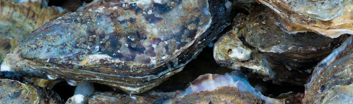 Les microplastiques menacent les huîtres perlières de Polynésie