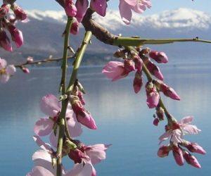 La biodiversité des lacs diminue et se standardise