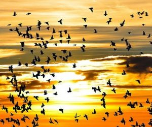 L'intelligence artificielle au service de la reconnaissance des oiseaux d'une même espèce