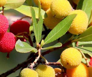 Les robots cueilleurs de fruits pourraient-ils être un réel atout pour l'arboriculture ?