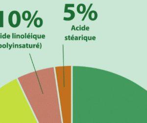 Huile de palme : les défis de la durabilité