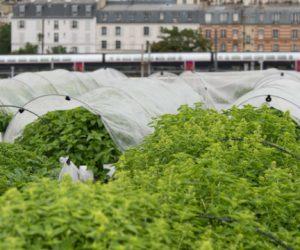 « Nous nous appuyons énormément sur l'expérience des agriculteurs » pour faire de l'agriculture urbaine