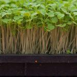 L'agriculture urbaine oscille entre innovation technologique et sociale