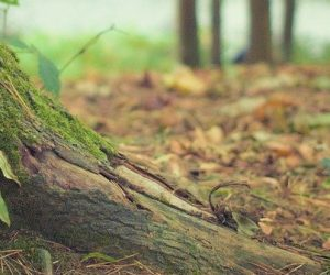 Évaluer les stocks de carbone dans le sol grâce à un nouveau modèle mathématique
