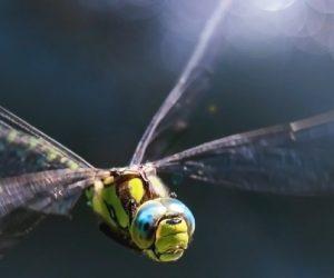 Ce robot-libellule surveille les milieux marins
