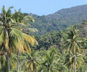 La forêt amazonienne brésilienne rejette plus de carbone qu'elle n'en stocke