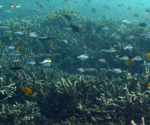 Des structures biomimétiques pour ressusciter les fonds marins