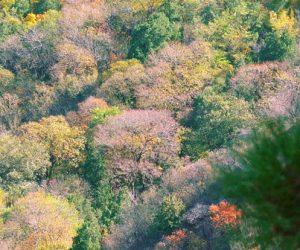 Un polymère biodégradable pour favoriser la plantation d'arbres en Chine