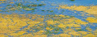 Une membrane nanocomposite capable d'éliminer la pollution aux phosphates