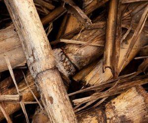 L'Europe surestime largement son utilisation à venir de la biomasse