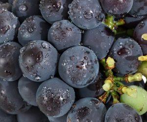 La Station Spatiale Internationale au chevet de la viticulture
