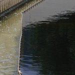 Une unité de dépollution des eaux usées transformée en biofactory