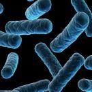 Des microbes seraient responsables de la plus grande extinction terrestre (étude)