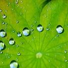 S'inspirer de l'effet lotus pour créer un revêtement super-hydrophobe