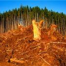 Les biocarburants utilisés en Europe accélèrent la déforestation