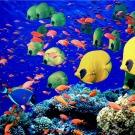 La biodiversité des poissons marins tropicaux porte la trace des récifs coralliens du passé