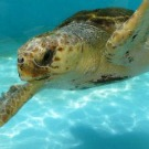 Les déchets plastique menacent la vie marine, selon l'ONU