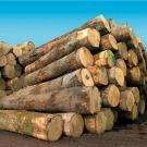 Royal mise sur la biomasse pour la transition énergétique