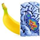 Comment pister la représentation des odeurs dans le cerveau