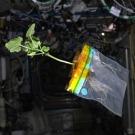 La NASA expérimente un potager dans l'espace