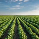 La nutrition humaine menacée par l'augmentation du CO2 dans l'atmosphère