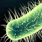4000 bactéries découvertes sous l'Antarctique
