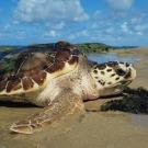 Biodiversité: la communauté internationale réunie sur un constat alarmant