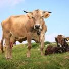 Quel est l'impact écologique de la viande ?