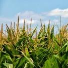 Le commissaire à l'agriculture s'engage sur le maintien de l'étiquetage des OGM