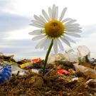Environnement: l'UE encore loin de ses objectifs (rapport)