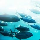 Le mercure continue de s'accumuler dans le corps des poissons