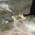 Le tout premier robot à voler au gré du relief sans accéléromètre grâce à son oeil bio-inspiré