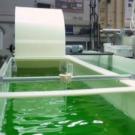 Bio-bitumes : des routes vertes à base de micro-algues ?